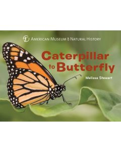 Caterpillar to Butterfly Board Book